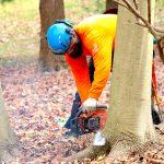 Tree Removal Service Stump
